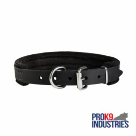 Padded Leather Dog Collar 25 mm for Dog Training