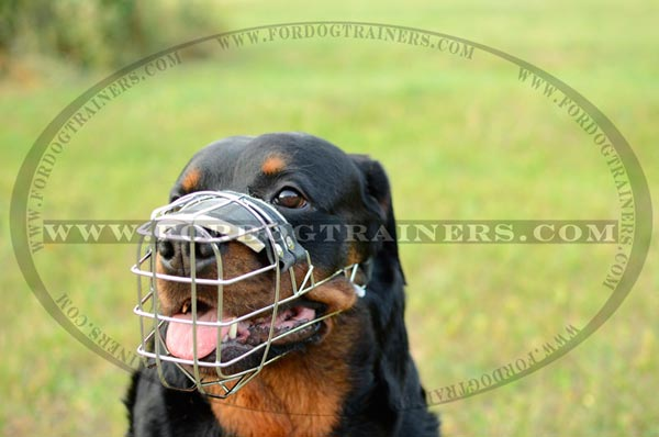 Comfortable metal dog muzzle on Rotty