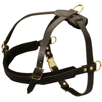 Leather Dog Harness for Dog Off Leash Training